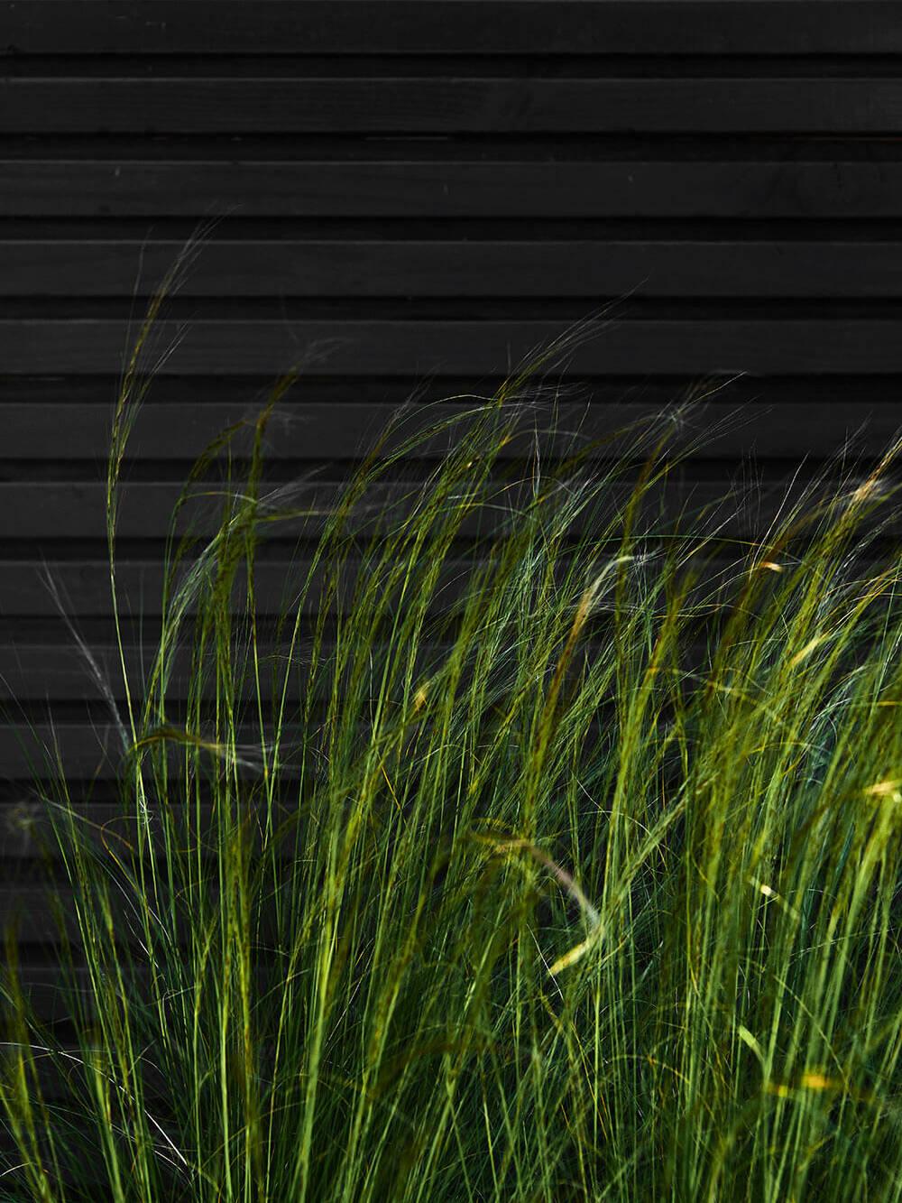 The-Garden-Store-Tuin-Interieur-Plantstyling-Tuinstyling-Esther-Biesot-grassen